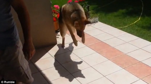 Shadow Jumping And Down