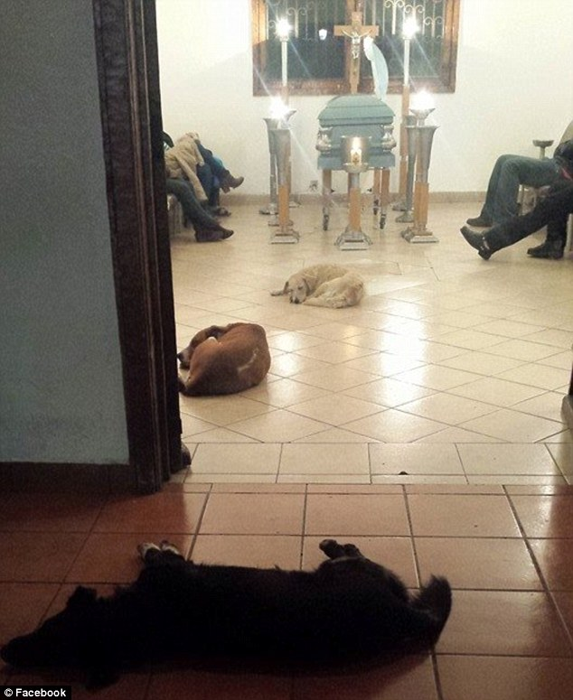 Devotion: A funeral for a woman in Mexico took an unexpected turn when a number of stray dogs unexpectedly showed up to pay their respects