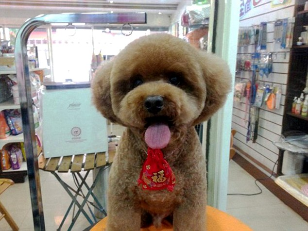 The Shape Of Things To Come For Dog Grooming Pets Have