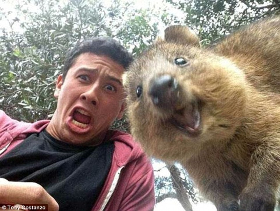 Image result for photobomb animals