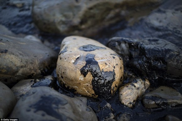 Pebble-sized amounts of tar seepage from the multiple off-shore rigs is common along the beaches in Santa Barbara, but spills on this sale are very uncommon (pictured, oil from the recent spill coasts rocks along Refugio beach)