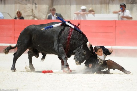 The bull drives horns into Ms Vicens, who escaped without serious injury and was later given the bull's ears as a trophy