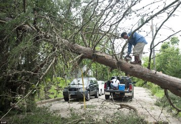 Image result for Falling trees, floods kill nine in Texas, others