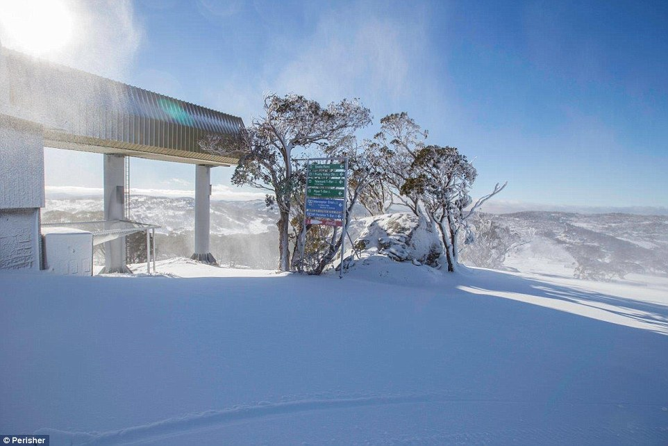 Perisher's the Village Eight Express will be open early for skiing and boarding on Friday thanks to the optimal weather conditions