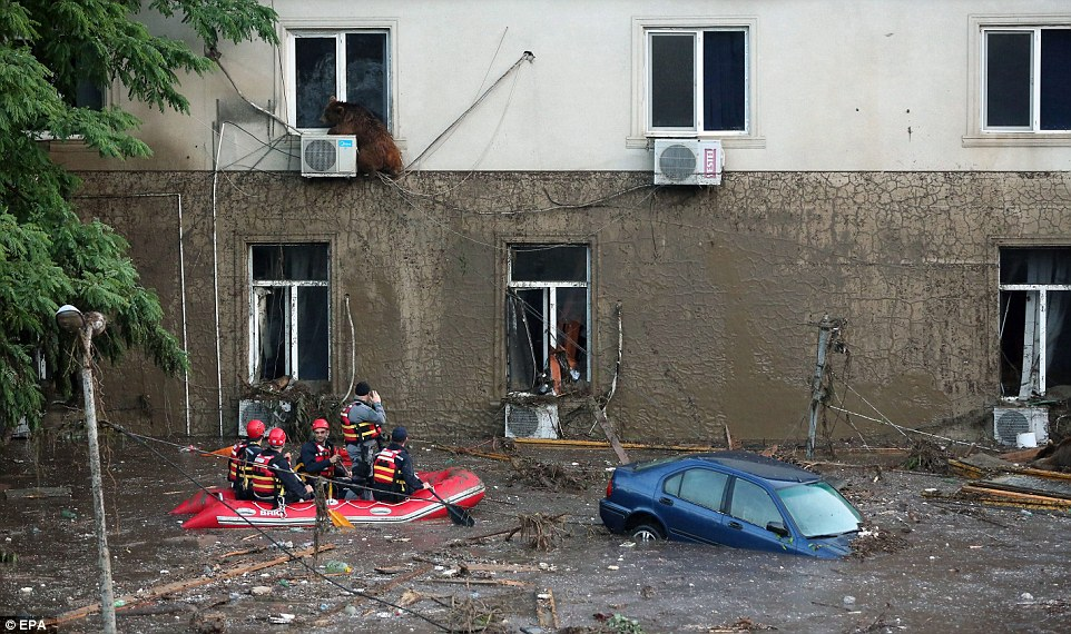 A runaway bear sits on an air conditioning unit of a second floor building above the flooded street below as rescuers in a boat look on