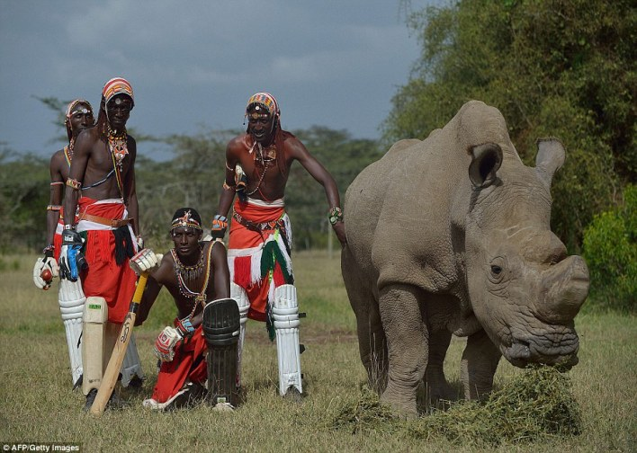 Rhino conservation: The Maasai Cricket Warriors are from Laikipia in Kenya - and have exchanged their spears for cricket bats