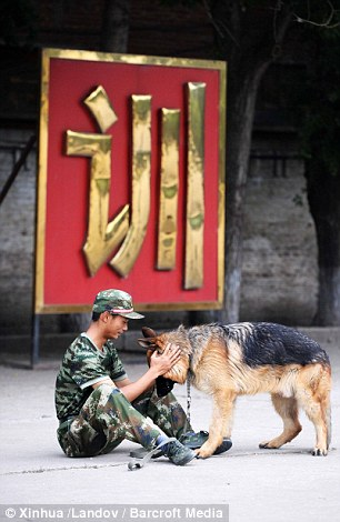 Good boy: One trainer takes a break with his dog