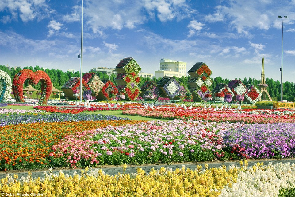 The spectacular bonanza provides a colourful oasis for the eyes of city workers, who can escape to the natural splendour