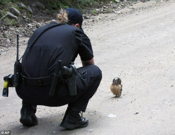 Colorado cop's encounter with baby owl posted online ...