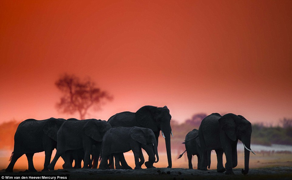 A pack of elephants wander the plains with the backdrop of a truly enchanting red sky above