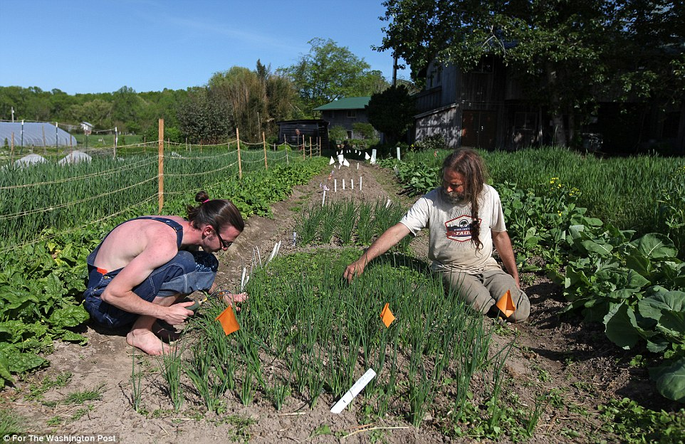 Gardening: The work also involves gardening (above) and making tofu and rope hammocks, which the commune sells commercially