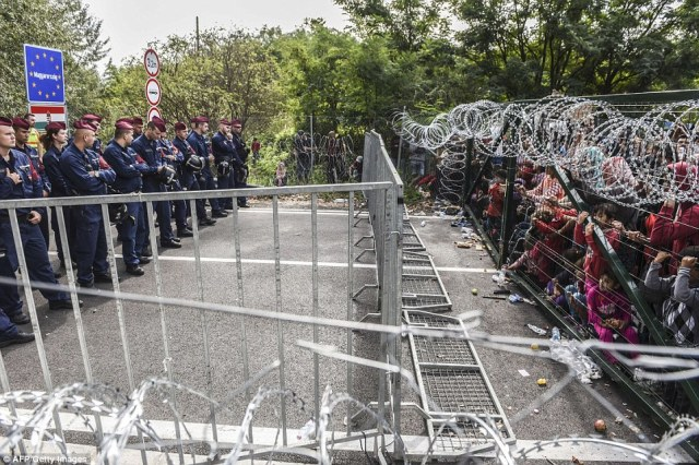 Image result for hungary border fence