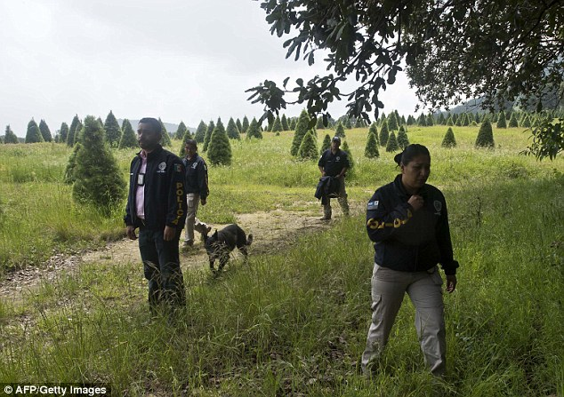 Search: Mexican police officers (pictured in August 2013) look for evidence in Tlalmanalco, near Mexico City,  where at least 7 bodies were discovered in a mass grave