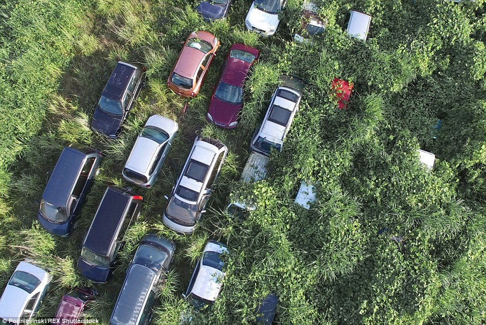 Many vehicles now lie almost completely covered by the forest, which has been left to grow wild since the Fukushima Nuclear Disaster