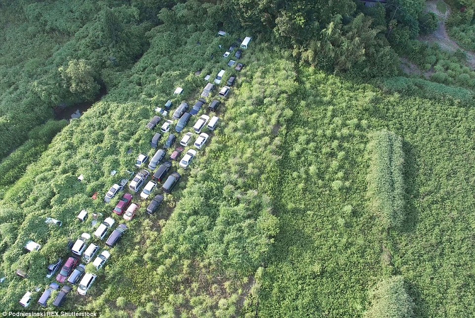 Dozens of vehicles lie abandoned and covered in overgrown bushes along what was once a stretch of road near the power plant
