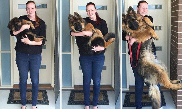Reddit Couple Document Their Dog's Extraordinary Growth