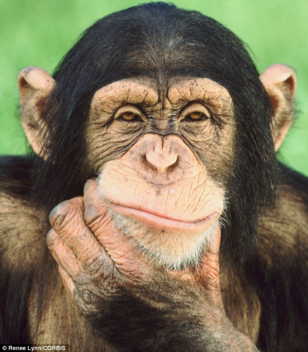Image result for clone chimp pictures
