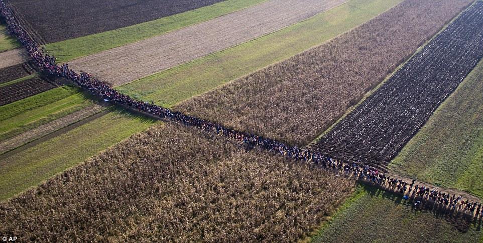 La enorme columna de inmigrantes pasa por campos en Rigonce, Eslovenia, después de haber estado detenido en la frontera con Croacia durante varios días