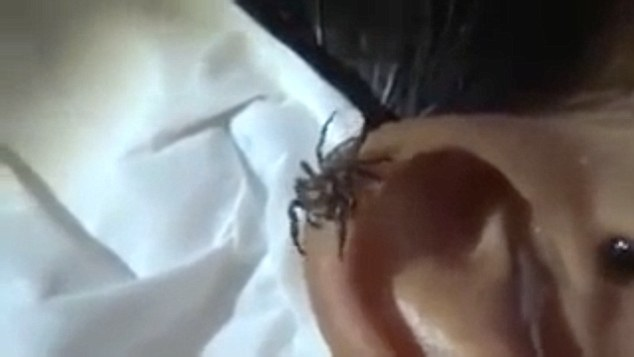 Rather than making a swift exit, the bug perches on the top of the man's ear but his friend continues to drip liquid onto the ear, which eventually causes the spider to leave for good