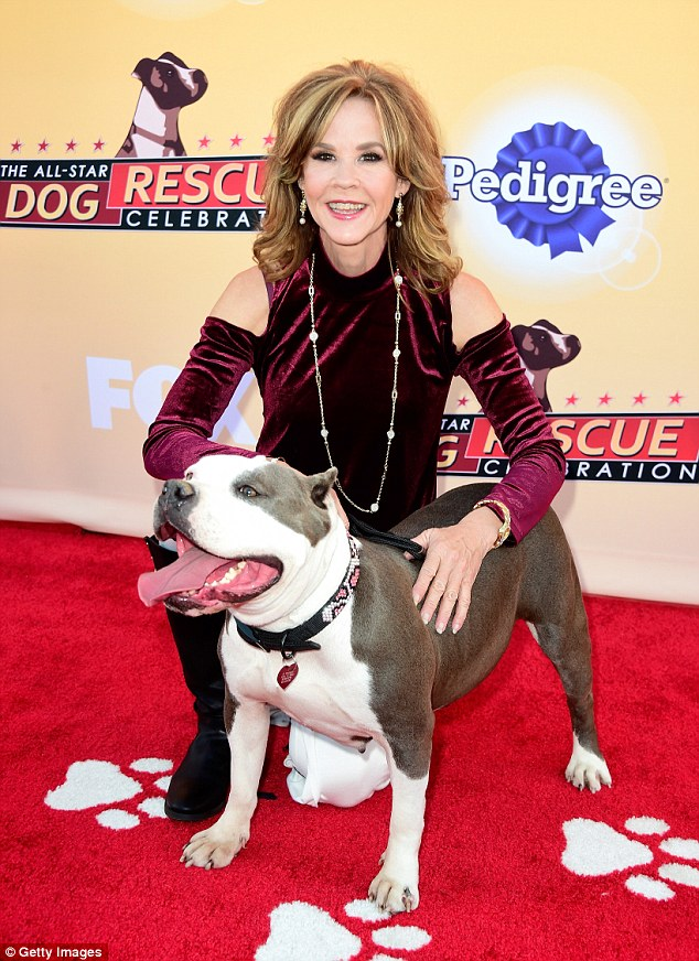 Happy go lucky: Heads were turning but in a good way for The Exorcist star Linda Blair and her smiley dog pal