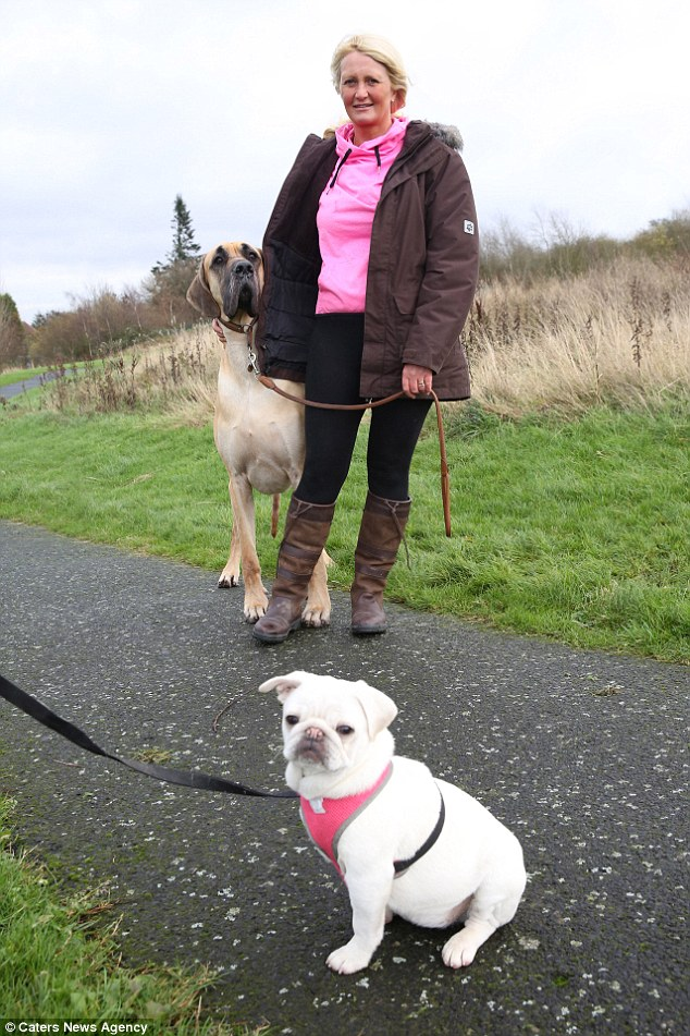 Owner Sian Barrett, 47, from Oldbury in the West Midlands, claims  Presley is terrified of smaller dogs