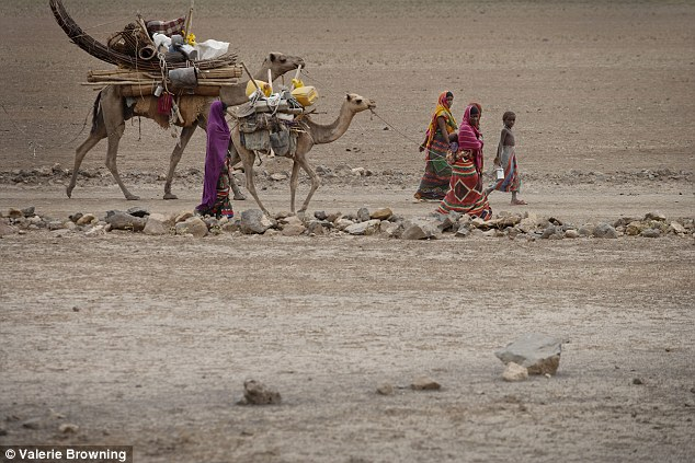 A group of women walk ahead of two camels carrying goods and supplies for the local community in Ethiopia