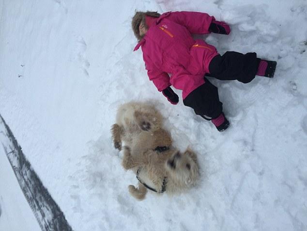 Hero Stray Dog Arthur Celebrates His New Life In The Snow