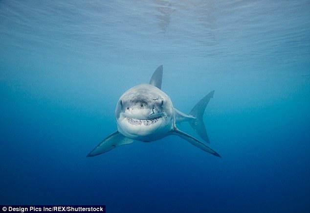 miall island requin