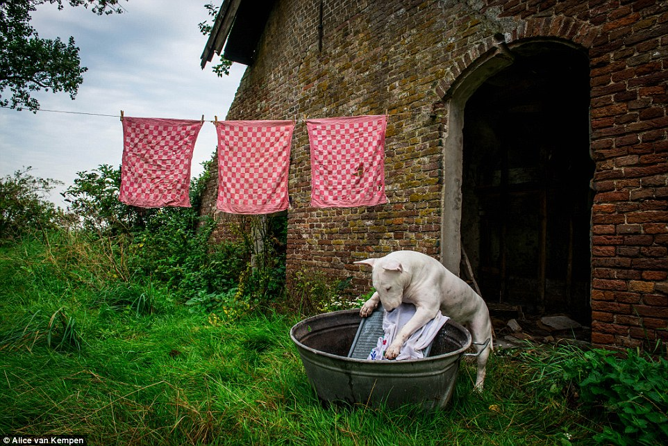 Alice, who has worked as a freelance dog photographer since 1998, snaps away as her dog washes some clothes in a Netherlands tub