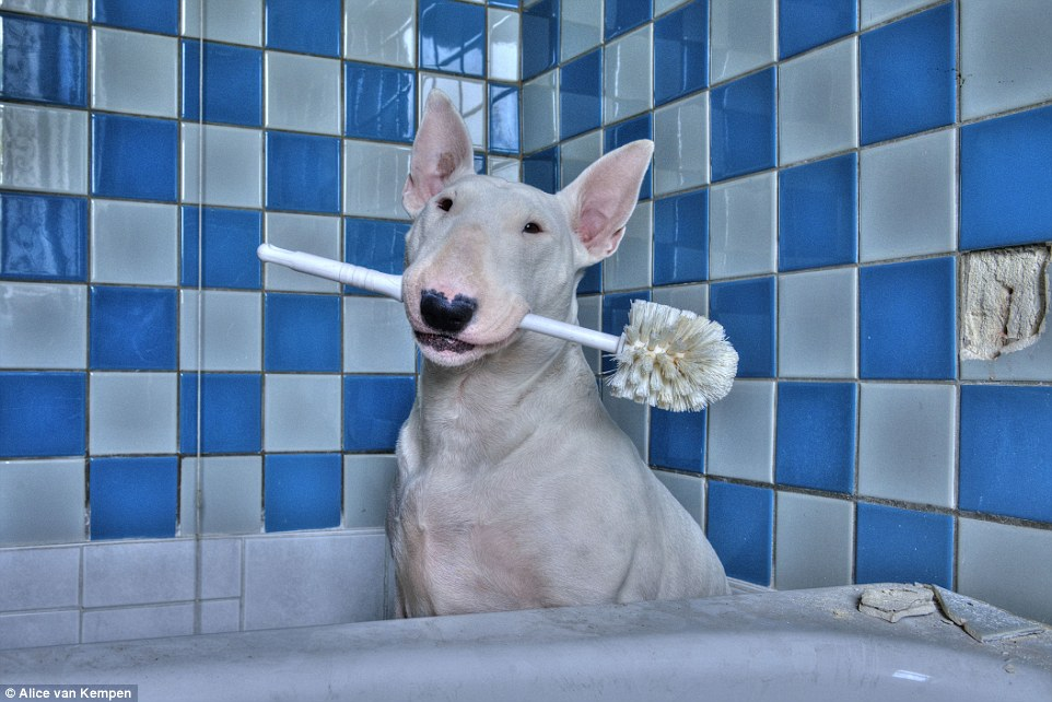Claire sits in the bathroom of a run down retirement home and she poses with a toilet brush. Alice said that the pup is 'extremely patient' and sometimes has to sit still for longer periods of time to get the right shot