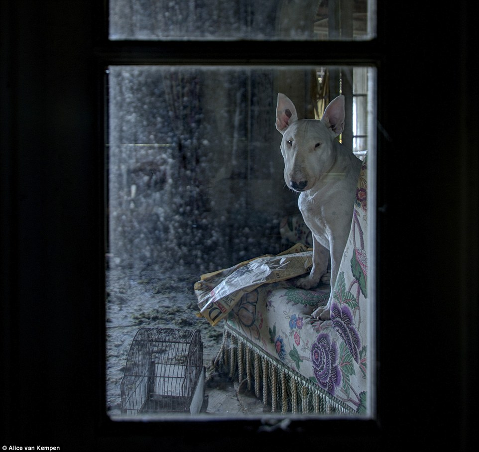 In a villa, the pooch looks out of the window as she sits beside a newspaper and an old birds cage in the time-forgotten room