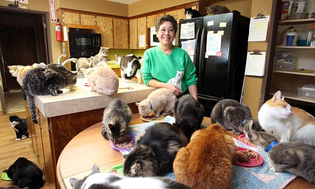 Cat House on the Kings' Lynea Lattanzio lives with 1,000 feral ...