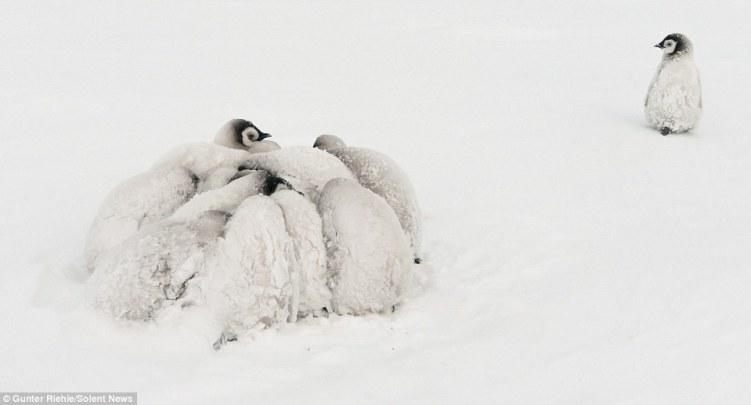 Image result for Birds Cuddling Together For Warmth
