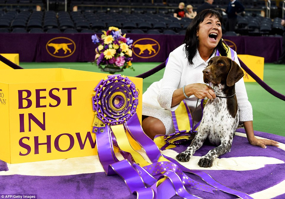 Image result for blue ribbon best in show