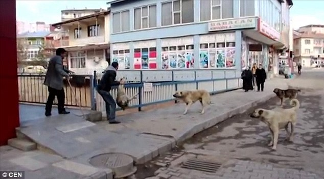 Nasty: Three dogs watch as a man picks the animal up by its legs and lifts its lifeless body into the air