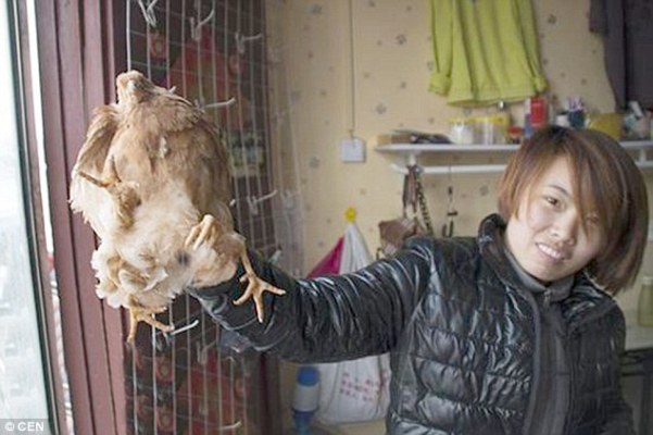 Freak of nature: The four-legged chicken was found in Shandong, China, by Ms Zhu (pictured) and her father