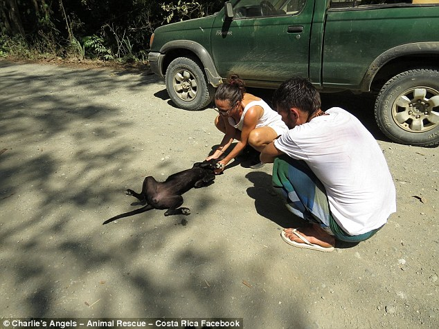 Rescue: TaniaCappelluti said she saw the exhausted dog by the side of the road and got out to help her