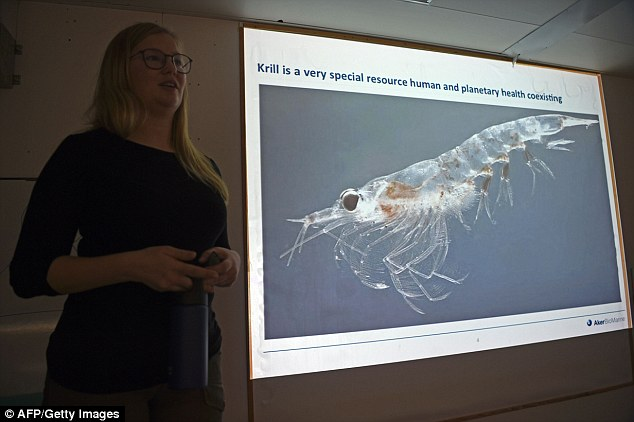 The inch-long crustaceans are considered the 'basis' of the Antarctic food chain and use sea ice to protect themselves and feed from the algae that grows from it
