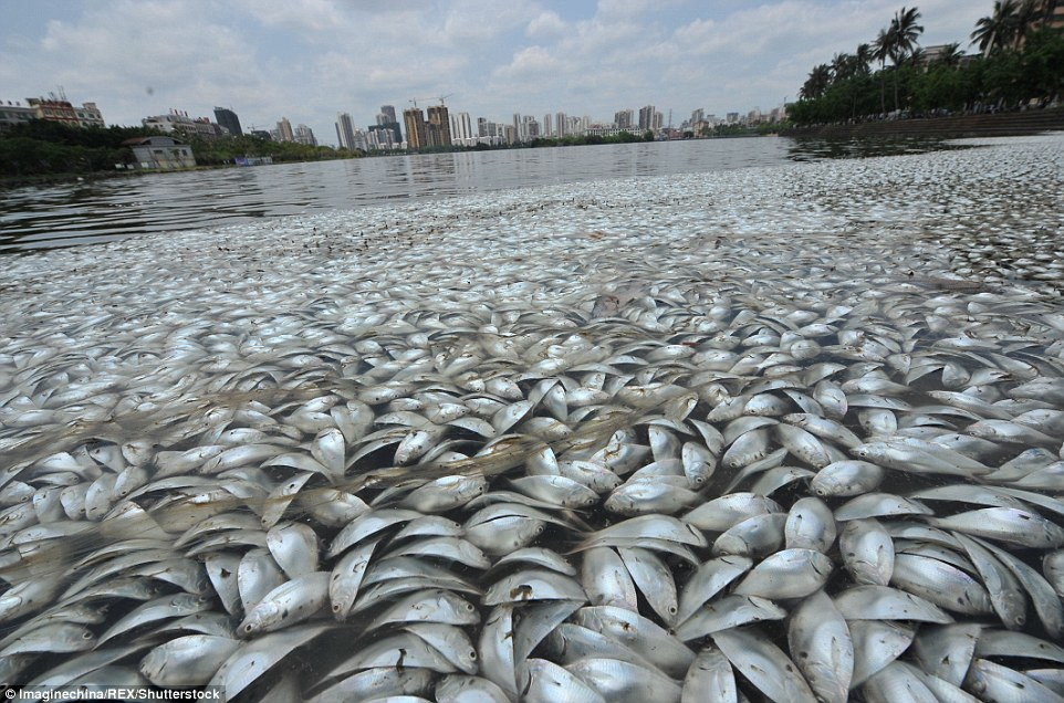 Disturbing images: Staff at the Marine and Fisheries Agency told reporters that pollution can be ruled out as a cause of death