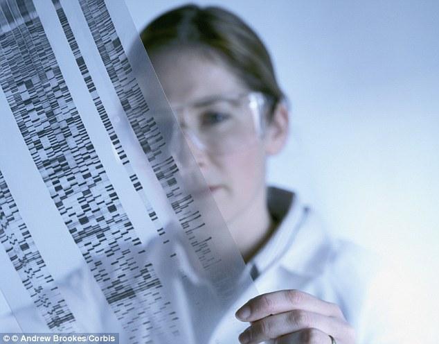 Na początku tego tygodnia około 150 naukowców, prawników i przedsiębiorców spotkało się w tajemnicy, aby przedyskutować możliwość stworzenia całkowicie syntetycznego ludzkiego genomu.  Oznacza to, że naukowcy odtworzyliby materiał genetyczny, który w naturalny sposób jest przekazywany od rodziców do dzieci.  Na powyższym obrazku naukowym naukowiec ogląda sekwencjonowanie DNA