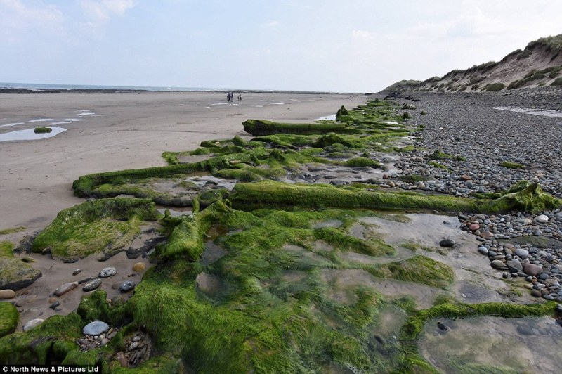 Remnants of the 7,000-year-old submerged forest have been exposed as the waters of the North Sea recede from the beach in Northumberland, exposing the edge of the region called Doggerland