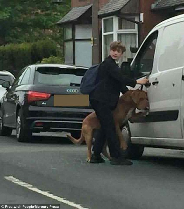 Heroic schoolboy Bradley attempting to untangle the lead that meant the French mastiff was left hanging from the van's window