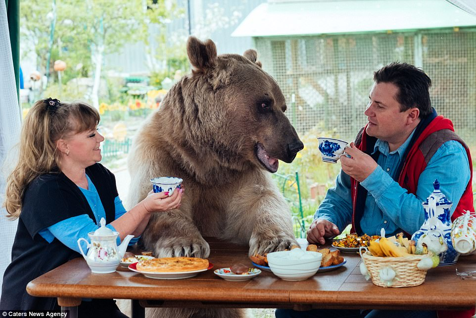 Surrogate child: Russian family Svetlana and Yuriy Panteleenko adopted the very large bear named Stepan aged three months