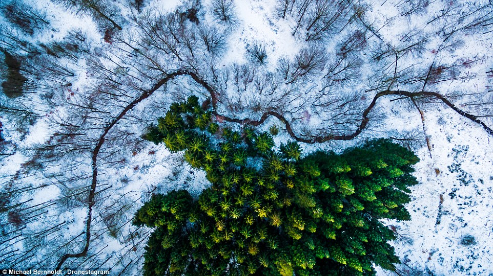 First place, nature and wildlife: Aerial photographer Michael Bernholdt took this photo of Demark's Kalbyris Forest with his Phantom 3