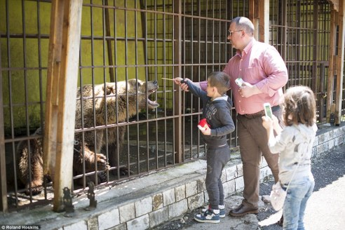 Only about 250 brown bears remain at large in the poverty stricken country (in addition to the estimated 80 bears living in cages)