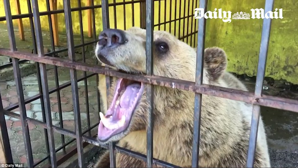 The restaurant owner was unapologetic about Tomi's plight. 'Once I forgot to leave him water and he made a big noise and I realised something was wrong so I went back to his cage and realised 'oh my god, I forgot his water'