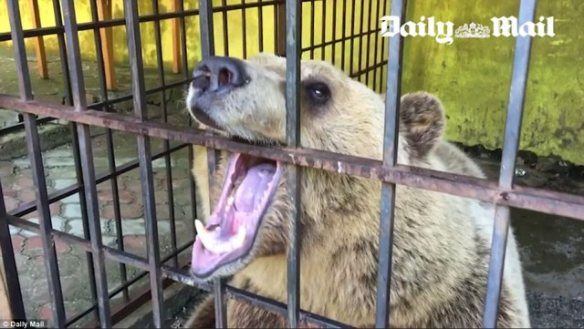 The restaurant owner was unapologetic about Tomi's plight.'Once I forgot to leave him water and he made a big noise and I realised something was wrong so I went back to his cage and realised 'oh my god, I forgot his water'