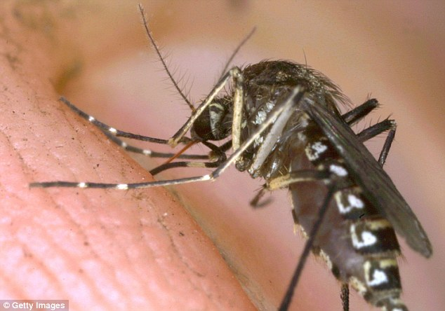 Researchers found that Anopheles arabiensis - one of the main species that transmits malaria in sub-Saharan Africa - avoids chickens when looking for hosts to feed on. A stock image of a mosquito is pictured above