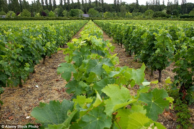 The Loire Valley, otherwise known as 'the Garden of France' - a lush wine region located in the centre of the country