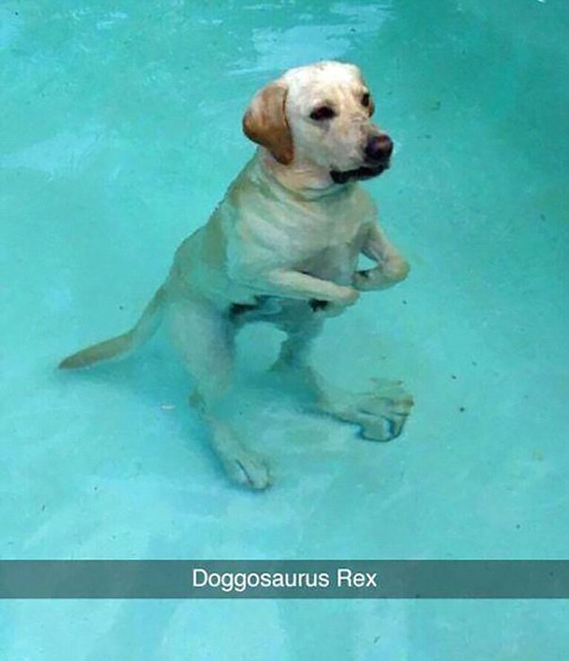 Being underwater, this dog's arms have a slight Tyrannosaurus rex feel to them - hence why this Snapchat is captioned Doggosaurus Rex